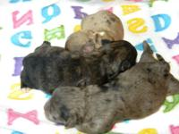 . I have 3 shihpoo young puppies that were born
