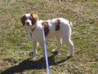 I am looking for an AKC Reg. Orange/White female