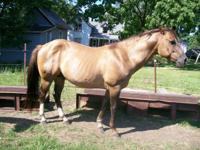 Description i have two quarter horses to sell 1 red dun