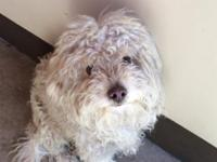 Type DOG  Breed Poodle Mix /  Age (approximate): 1