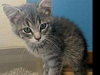 Iago's story Iago is a quiet kitten who came to us as a