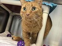 Ian's story All of our adoptable pets are spayed or