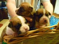 We have 3 Female boxer puppies, pure bred and