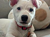 Ice's story Ice is a male 4-month old terrier mix from