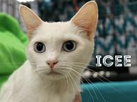 Icee's story The adoption fee is $85.00 with an