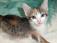 Idele's story Description: beautiful calico