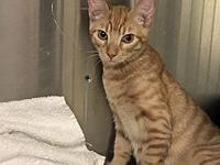 Ike's story Ike is an orphan kitten and was hand
