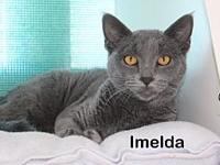 Imelda's story This gorgeous sweetheart is Imelda. She