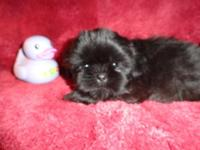 She is jet black. See with the young puppies to see if