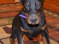 Doberland's Eye of the Tiger (aka Nina) is a black/rust