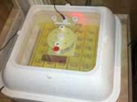 I have a 1588 electric hova bator incubator made by