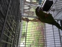 India is an adult female Hybrid Conure. She is looking