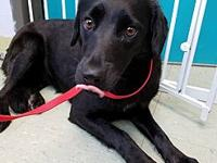 INDIGO's story INDIGO was brought in as a stray in
