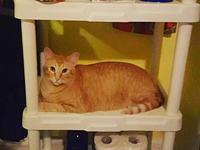 Indy's story Well he is the perfect orange cat in his