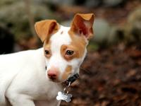 Indy is a very lively, fun loving and energetic,
