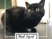 Ingrid's story After being left in a carrier on the