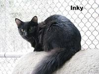 Inky's story Inky is friendly, well socialized and good