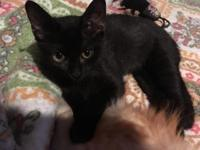 Inky's story My name is Inky! If you're interested in