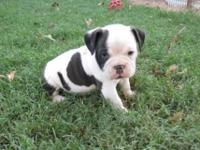 Dottie ia a generational black and white pup. I have