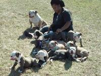 We have an excellent litter of vaccinated, wormed,