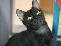 Ione's story Very loving and calm. Loves attention!