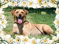 Iris's story You can fill out an adoption application