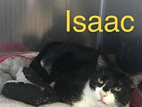 Isaac's story Isaac is very sweet and loving. He is