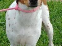 Isabella is a super sweet 1yr old female who loves to