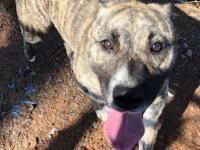 Isabelle is a beautiful brindle mix. She is about 1yr