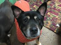 Isis is an adult female shep mix looking to find her