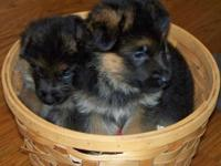 I am searching for a Male or female  puppy with a