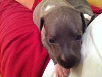 WE HAVE 3 FEMALE PUPS AND 2 MALE PUPS AKC REG PUPS .