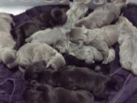 We have 6 girls and 6 boys. 3 grey boys. 3 black boys.
