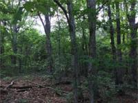 5+/- Acre wooded, interior lot on Lake Richard B.