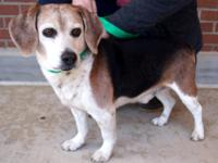 Breed: Beagle Sex: Male Weight: 15lbs Size: Small Age: