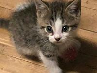 "Ivan's story Ivan and Ivy are always ""hogging"" the cat"