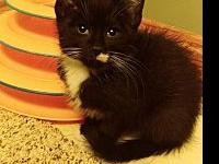 Ivey's story Ivey is the most loving kitten This kitty