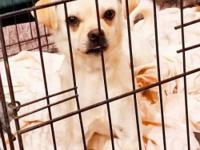 Ivory is now ready to find a loving home. Found as a