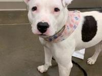 My story Ivy is an affectionate girl who would love to