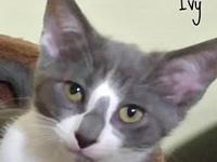 Ivy's story Ivy is a delightful little kitten! Curious,