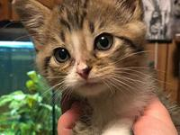 "Ivy's story Ivan and Ivy are always ""hogging"" the cat"