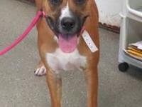 Ivy's story If you come to visit me at the shelter,