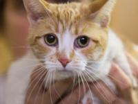 Izzy is a 3-year-old female who is very shy but
