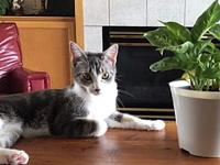 Izzy's story Izzy is the sweetest kitty, so gentle, yet