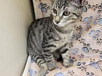 Izzy's story We still have kittens available for