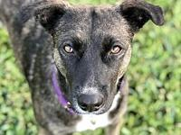 Izzy's story Izzy is currently in a foster home. If you