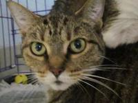 J.J. DECLAWED FRONT's story J.J. is a 9 year old sable