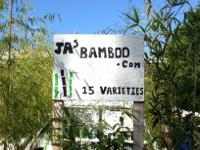 Hello and Welcome to J.A. Bamboo nursery.