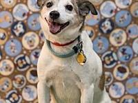 My story Jack-A-Roo/CP is a wonderful 9 year old male.