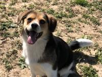 Jack is a 1 year old beagle mix. He is such a sweet boy